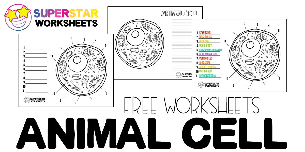 Animal Cell Worksheet - Superstar Worksheets