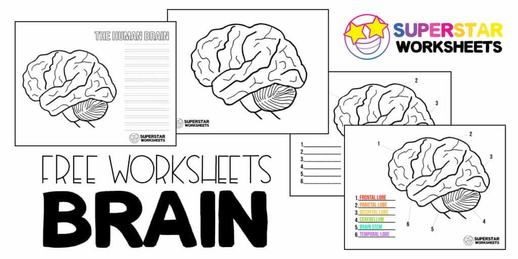Human Brain Worksheets Superstar Worksheets