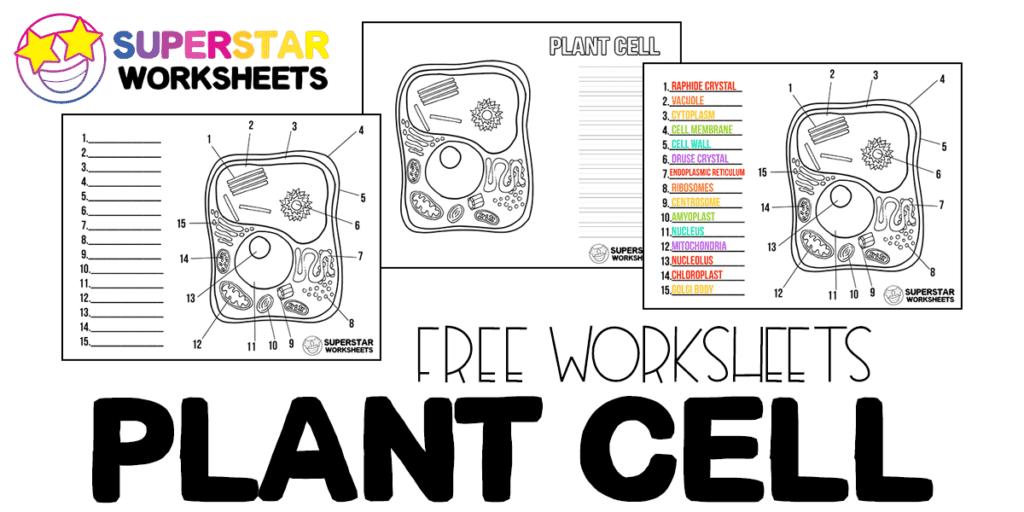 Plant Cell Worksheets - Superstar Worksheets