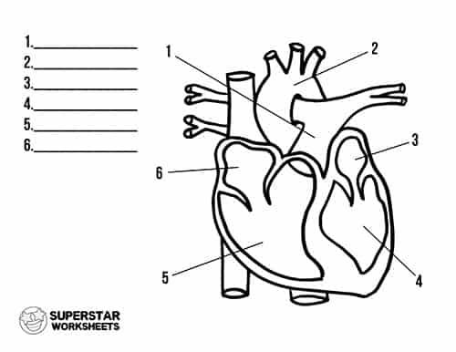 Heart Worksheets - Superstar Worksheets