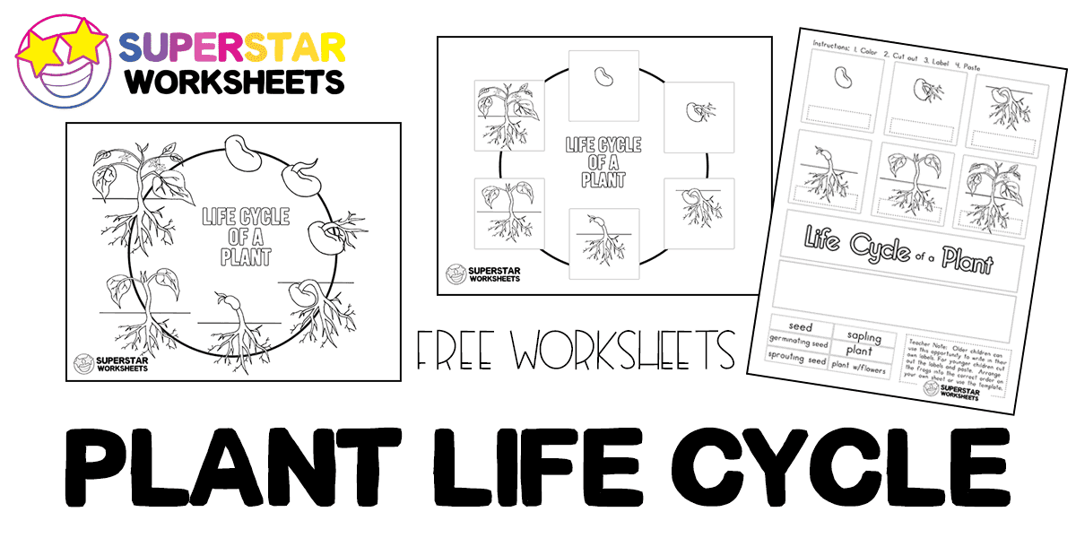 Plant Life Cycle Worksheets Superstar Worksheets