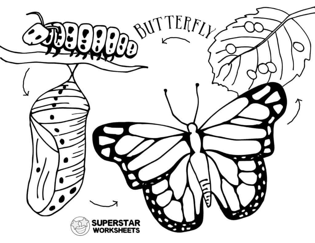 Butterfly Worksheets - Superstar Worksheets
