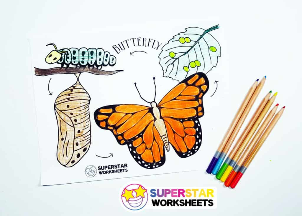 Free Life Cycle Coloring Pages | StuwahaCreations | 734x1024