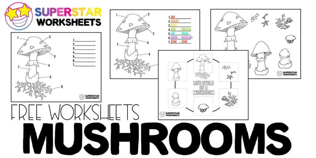 Mushroom Life Cycle Worksheets - Superstar Worksheets