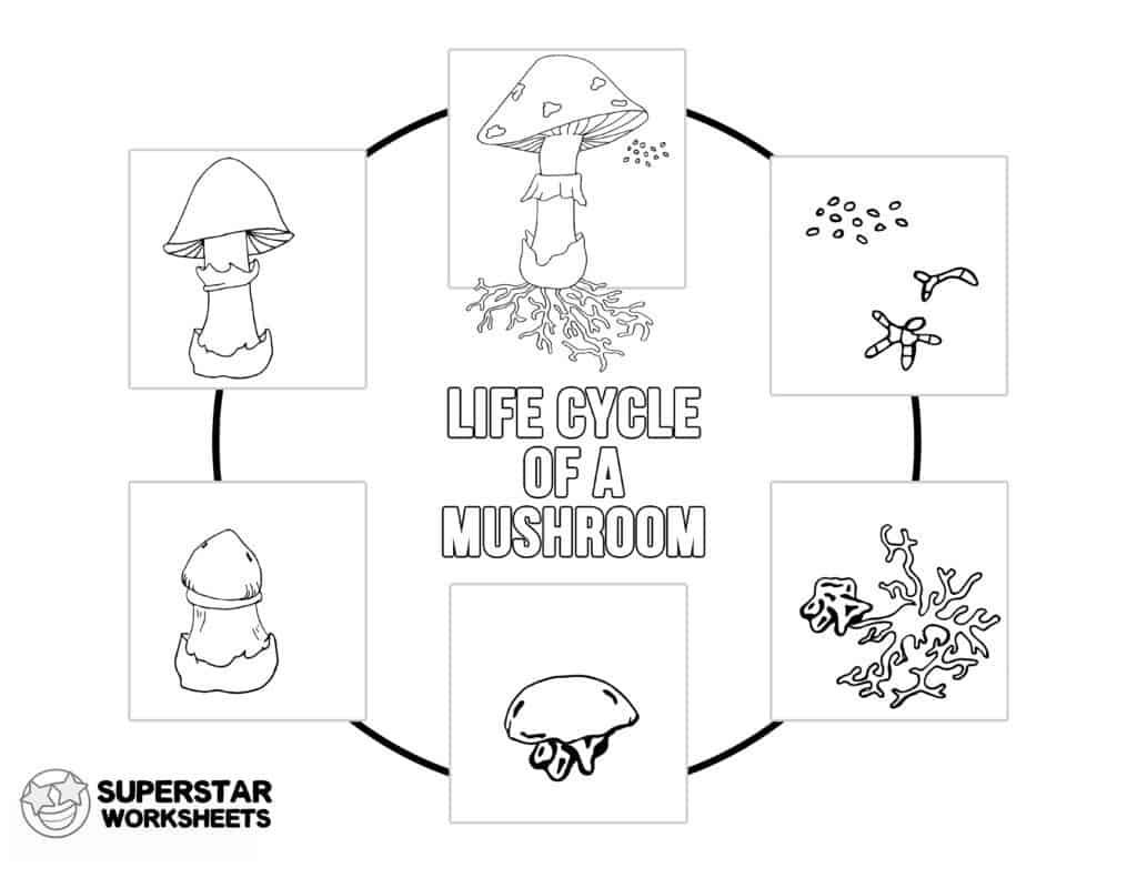 Mushroom Life Cycle Worksheets Superstar Worksheets