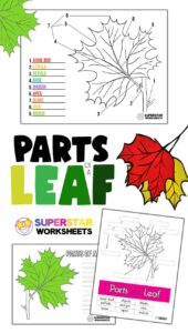 Parts of a Leaf Worksheet - Superstar Worksheets